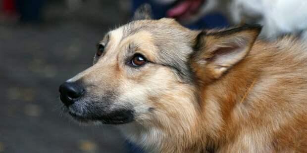 Соседство с собаками не устраивает посетителей магазина на Флотской