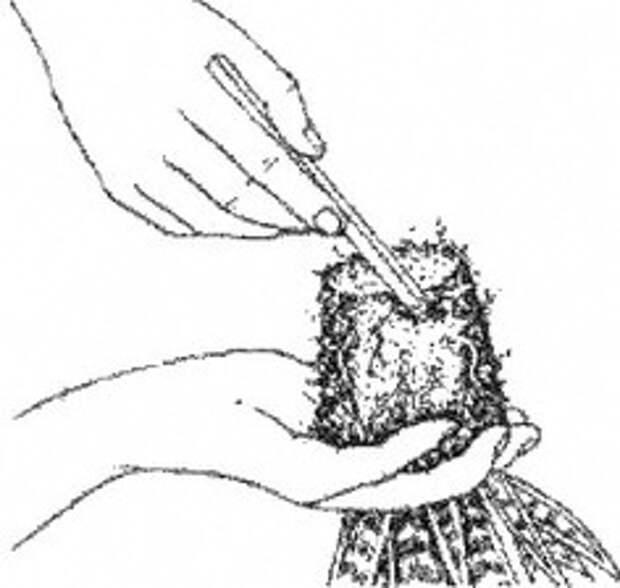 Деление корней сансевиерии в картинках