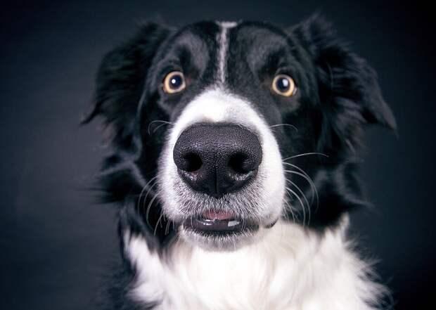 Мужчина взял пса из приюта. А ночью проснулся от того, что на него в упор смотрят. Рассказываем, зачем пёс разбудил нового папу