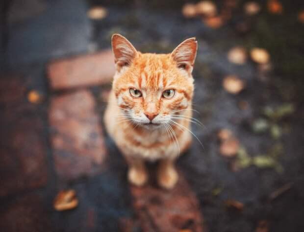 Рыжий кот стал звездой футбола