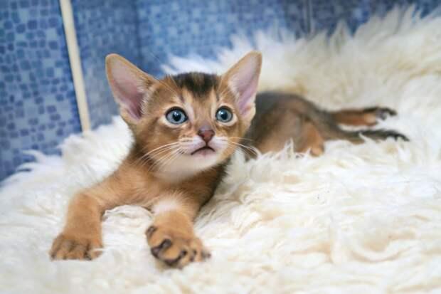 «Не укладывается в голове»: жители Токсово спасли оказавшегося в сливе унитаза котенка