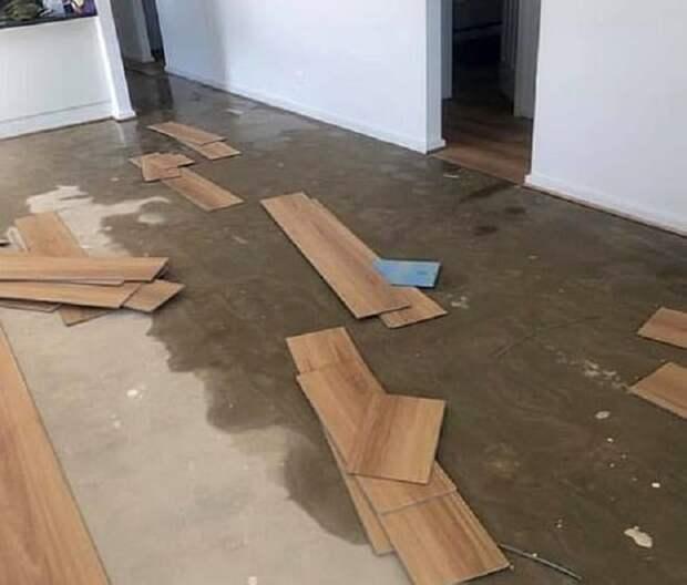 Кошка устроила потоп в доме и заставила хозяев выложить круглую сумму на спасение жилища