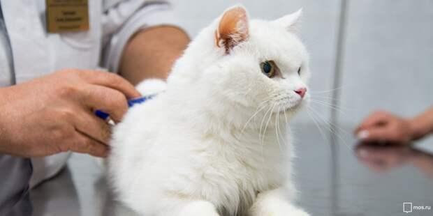 Мобильный пункт вакцинации животных откроется на улице Маршала Катукова
