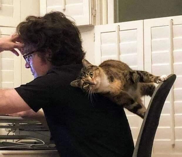 Притяженья больше нет: 30 котиков, которые плевать хотели назаконы физики