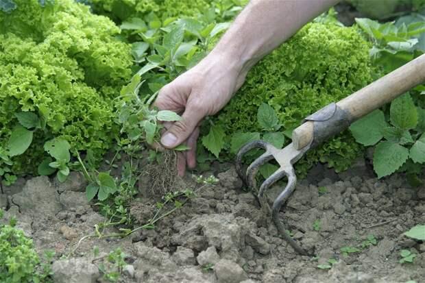 9 отличных способов избавиться от сорняков и травы без химии
