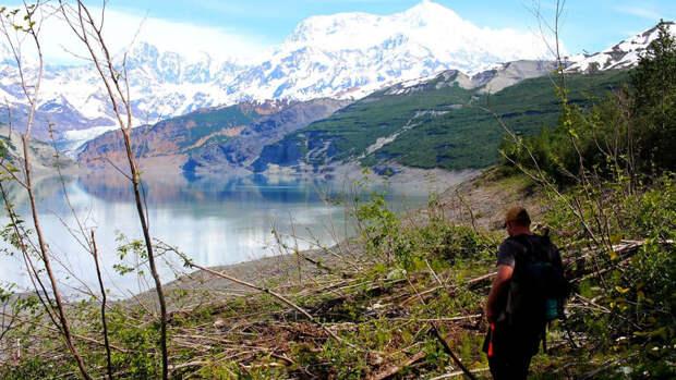 Поваленные деревья на Аляске.