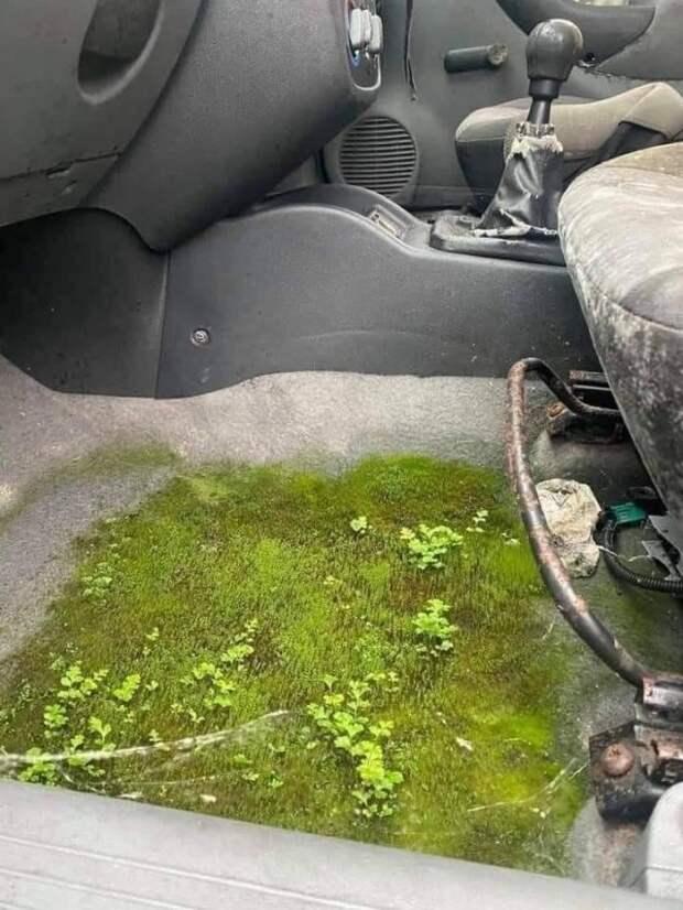 Растения в автмобиле