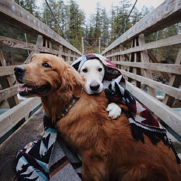 Собаки, по кличке Уотсон и Кико, очень любят отдыхать на природе.