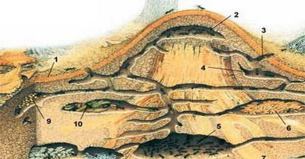 Ниже — наблюдения за муравеником экспедиции МГУ: животные, история, факты