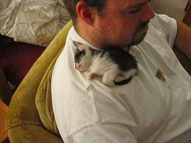 Мягких и теплых котэ вам в ленту!