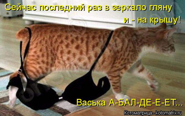 kotomatritsa_y (1) (640x400, 220Kb)