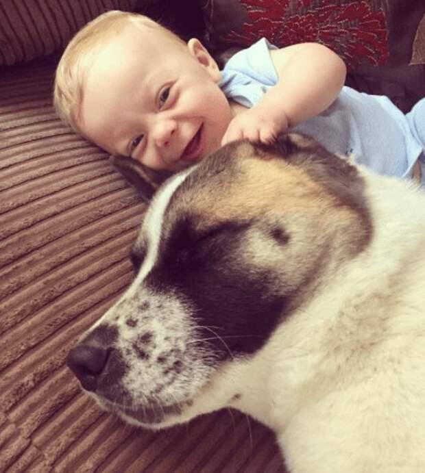 Собака стала ангелом-хранителем этой семьи