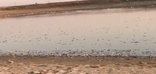 В прокуратуре назвали предварительную причину гибели рыбы в водохранилище на севере Калмыкии