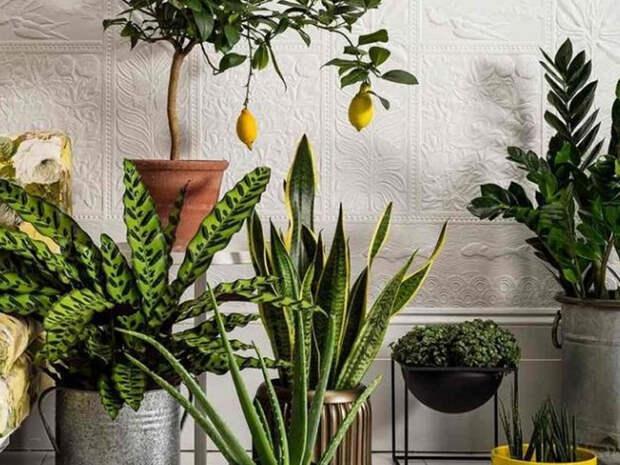 Комнатные растения, которые опасны для здоровья и энергетики дома