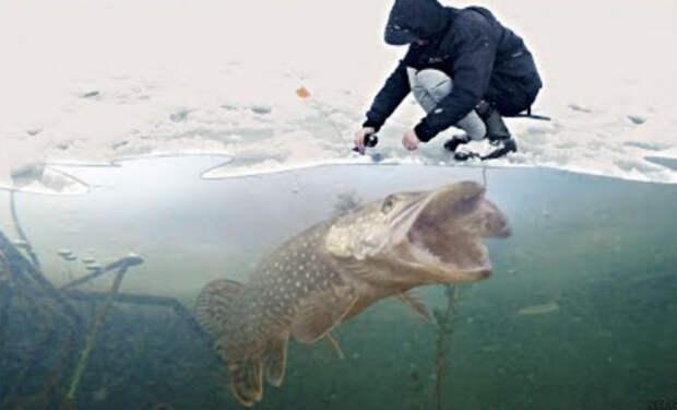 Камеру опустили на дно Чернобыльской реки: люди ищут сомов-гигантов
