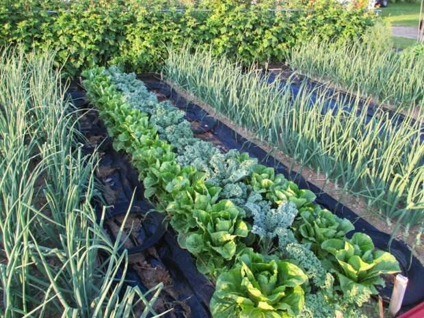 Как повысить урожайность грядок