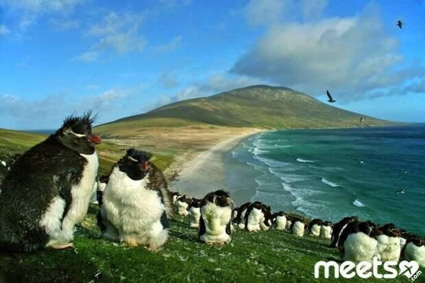 Фолклендские острова Поездки, маленькие страны, путешествие, страны мира
