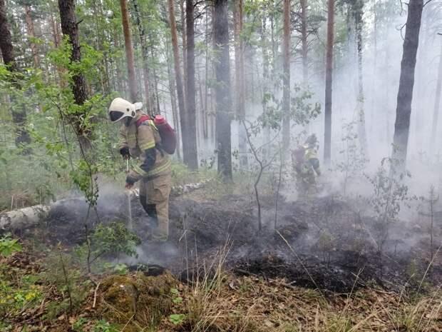В России горят более 785 тысяч га лесов