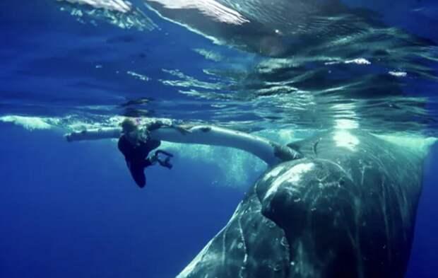 Огромный кит толкал испуганную девушку носом, потому что спасал её