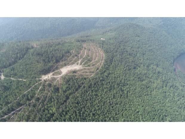 От запретов в лесу лучше не станет: как ограничивать экспорт древесины