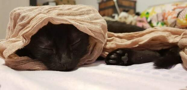 Хозяева нашли эту кошечку по объявлению и целый год боролись за её жизнь домашний питомец, животные, забота, кошка, спасение