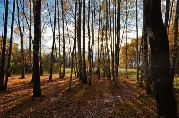 Жителям Северного Тушина расскажут о природе Алешкинского леса