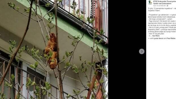 Напугавший жителей Кракова таинственный зверь оказался круассаном