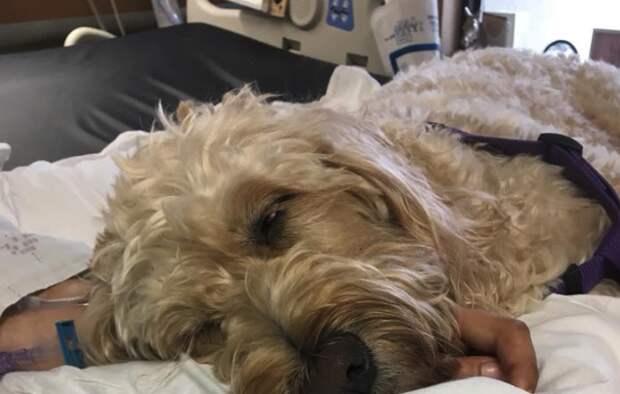 Девушка вышла из длительной комы после того как ее руку лизнула собака