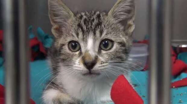 Застряв в трубе, котёнок жалобно мяукал, и волонтёрам пришлось пройти «подземный квест», чтобы достать его