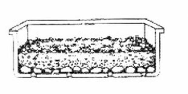 Размножение сансевиерии (тещиного языка) в картинках