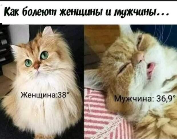 Помыть кошку в ванной - это как провести обряд экзорцизма