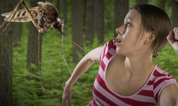 Оказывается, комары умеют выбирать самую аппетитную жертву