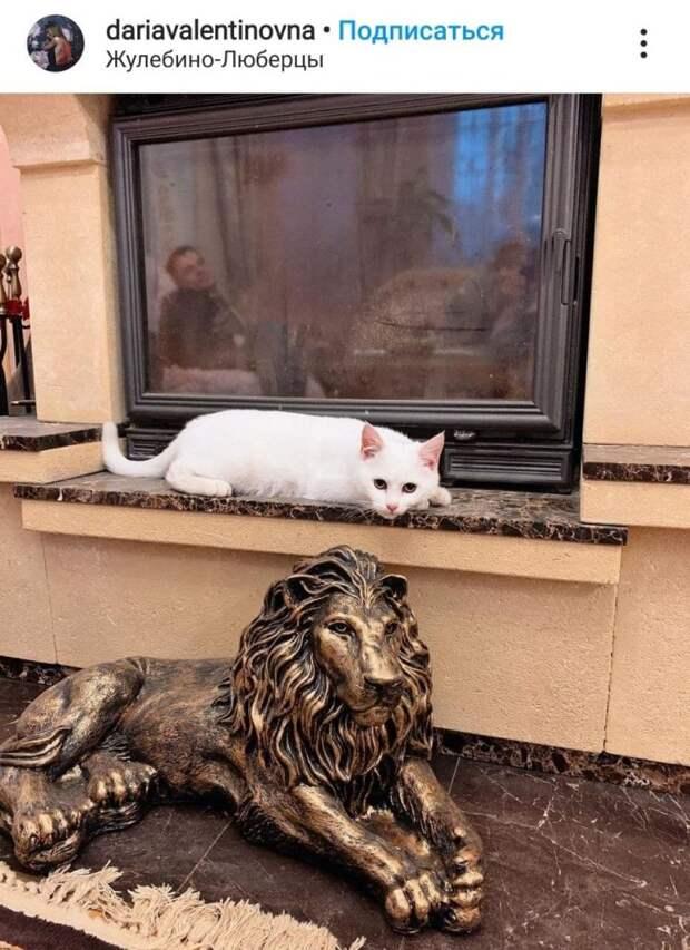 Фото дня: еще одна из рода кошачьих