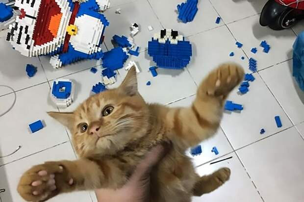 Кот в руках