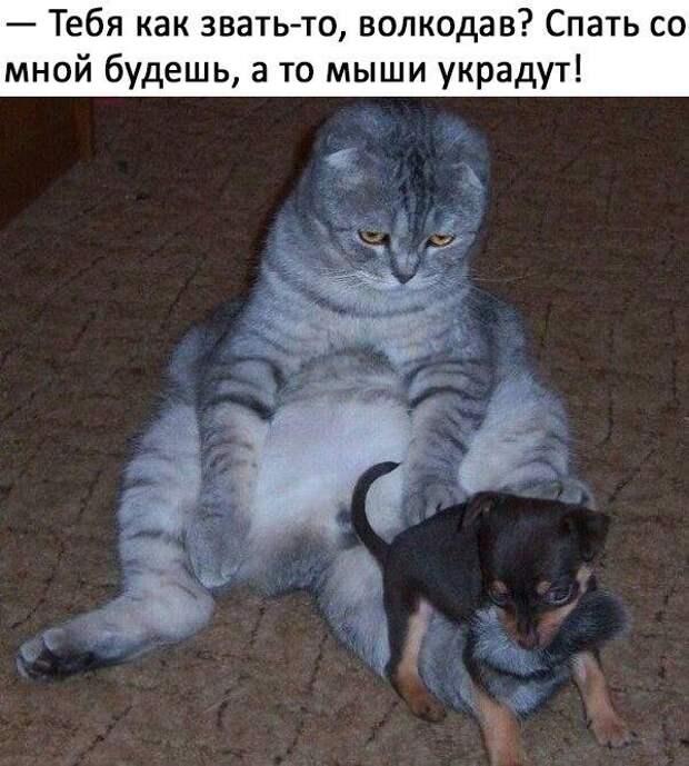 Веселые картинки и смешные фотографии с надписями из сети