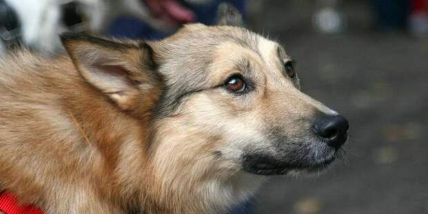 Депутат МГД Козлов поддержал стартовавший в Москве проект помощи бездомным животным «Лучший друг»