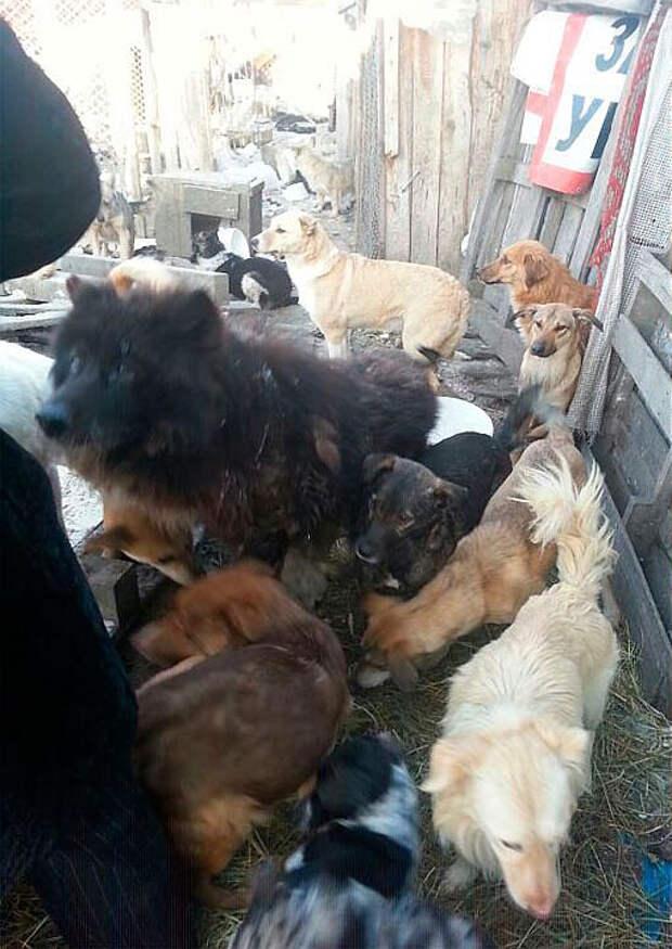 Клавиной любовью к собакам волонтеры сначала восхищались. Она приезжала к ветврачам и просила отдавать ей собак. Фото: из личного архива героя(ев) публикации