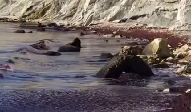 Черное море окрасилось в красный цвет