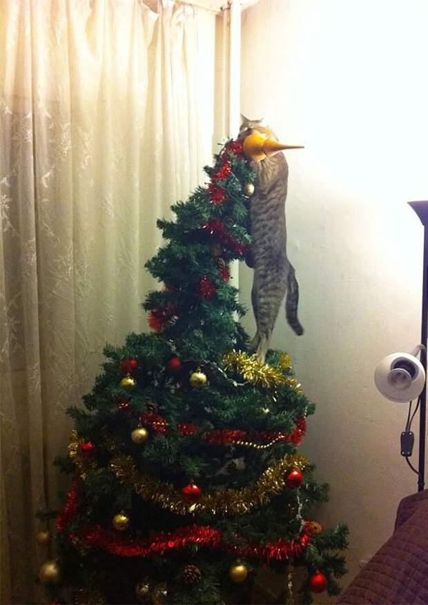 """14. """"Ну так и быть, помогу украсить елку"""" животные, новый год, праздник к нам приходит, разрушительная сила, рождество, собаки и кошки, юмор"""