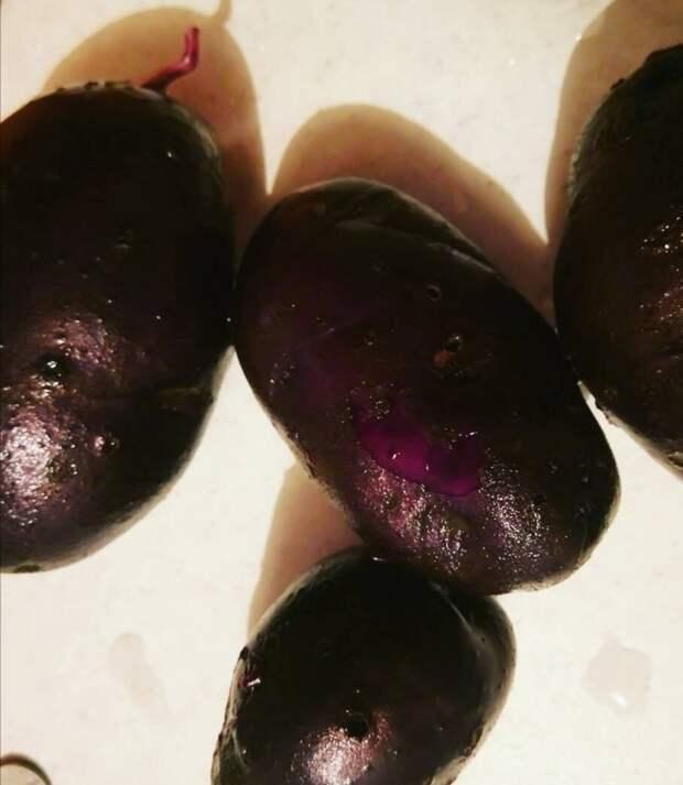 Несколько причин, почему мы отказались от фиолетового картофеля.