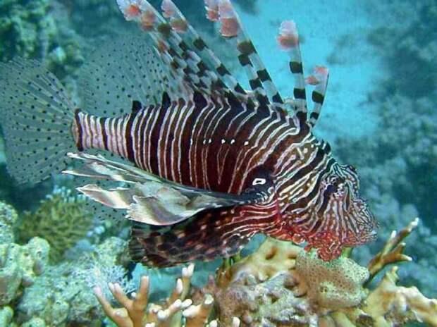 Не вся рыба съедобна. |Фото: aminoapps.com.