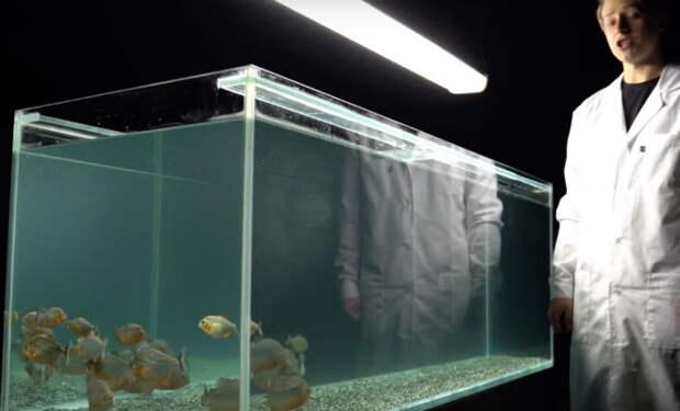 Смельчак забрался в аквариум к пираньям и включил камеру