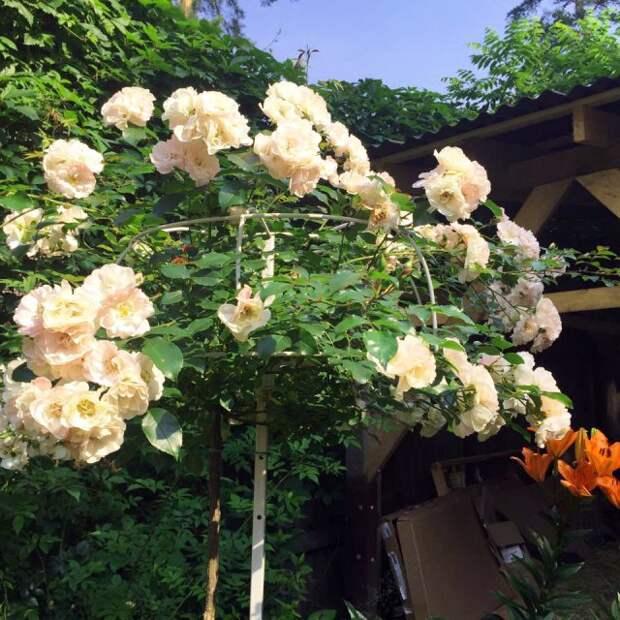 Опора для роз