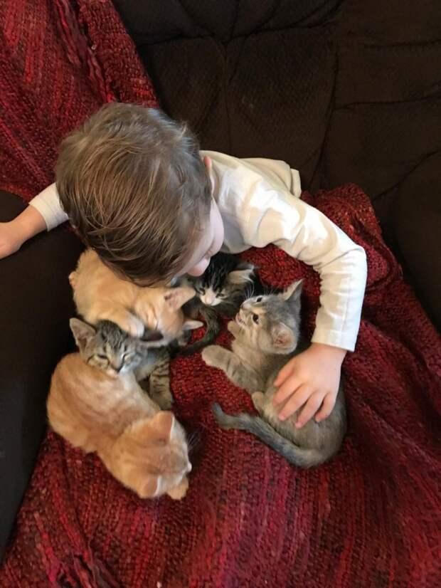 Двухлетний малыш очень любит приютских котят и помогает их выкармливать