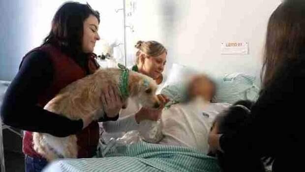 Собаки ночевали около больницы, чтобы спасти своего хозяина