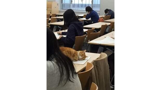 В японском университете живет кот. Он спит на лекциях и общается со студентами