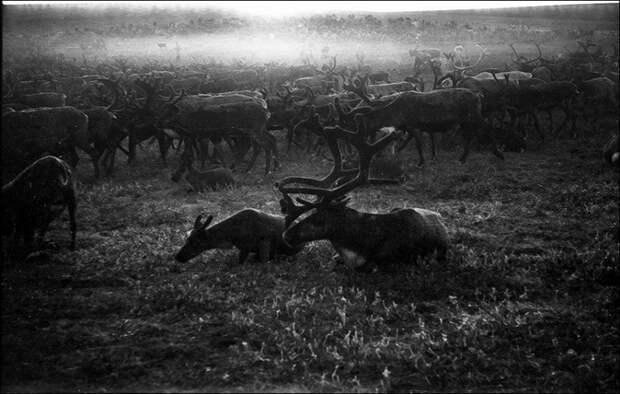 Негород в снимках красноярского фотографа Александра Кустова 20