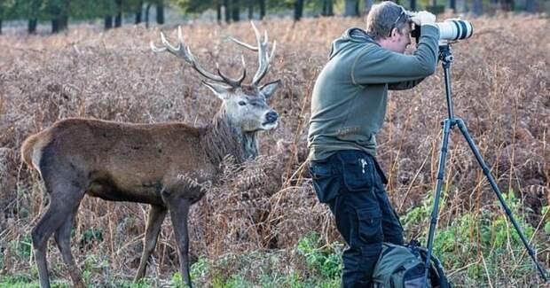 Захватывающий дух снимок, который будет рад запечатлеть любой фотограф дикой природы