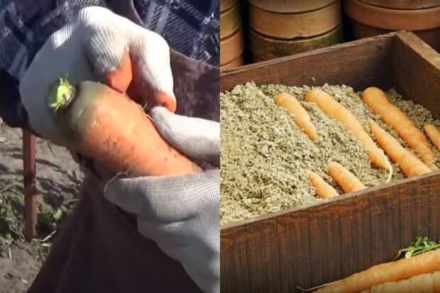 Как сохранить морковь в домашних условиях
