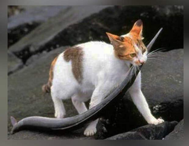 10 фото-доказательств того, что кошки - самые лучшие охотники